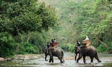 The Thrill of Animal Encounters Is Dissipating for Travelers