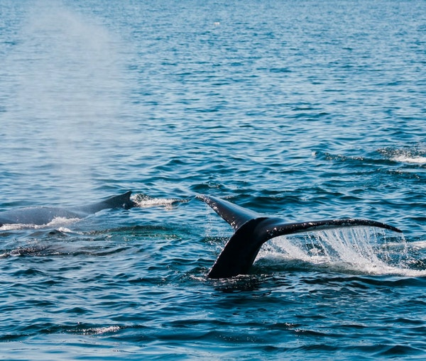 How to Spend a Weekend Saving Cape Cod's Dolphins and Whales