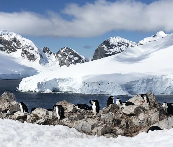 Antarctica for Polar Explorers Who Might NotBeSo Tough After All