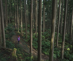 How to Hike Japan's UNESCO World Heritage Pilgrimage Trail