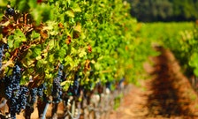 Learn How to Savor Napa Valley Like a Master Sommelier