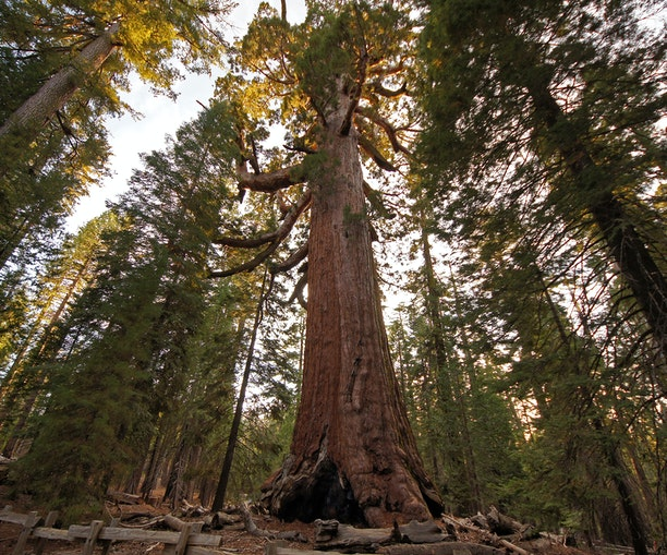 Yosemite's Giant Sequoia Grove Reopens After Nearly Three Years