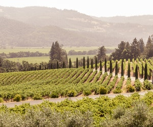 New Ways to Explore Napa Valley (and They're Not All in Tasting Rooms)