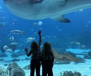 Big-Time Atlanta Adventures for All Ages