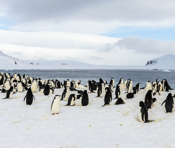 The Ultimate Guide to Polar Cruising