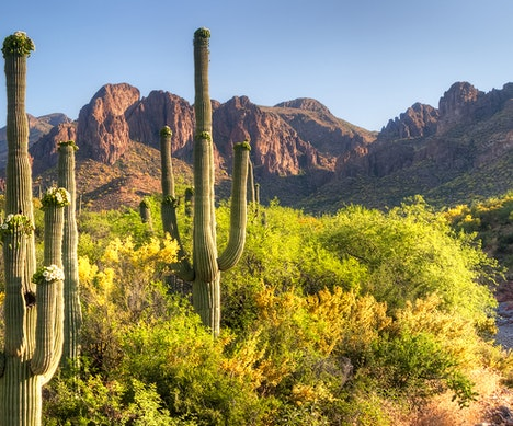 7 U.S. National Parks That Shine in the Spring  Arizona