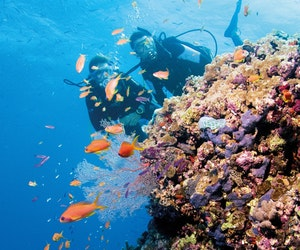 Why the Great Barrier Reef Should Be on Your Bucket List