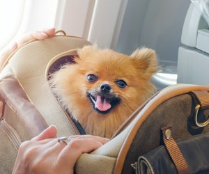 All Emotional Support Animals Could Be Banned From Planes Soon