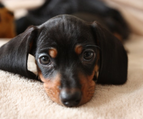 A Museum Devoted to Wiener Dogs Just Opened in Germany   Germany