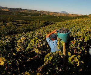 Drink Your Way Around the World With These Wine Delivery Services
