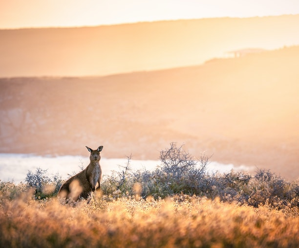 Virtual Visits to South Australia You Won't Want to Miss