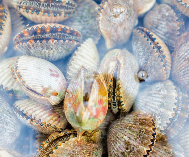 Swim for Supper on Your Next Florida Trip, Where Scallops Are on the Menu