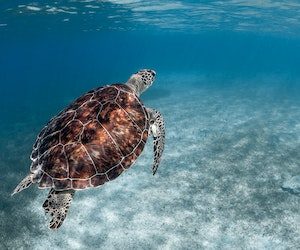 The Best Snorkeling and Scuba Diving in Puerto Rico