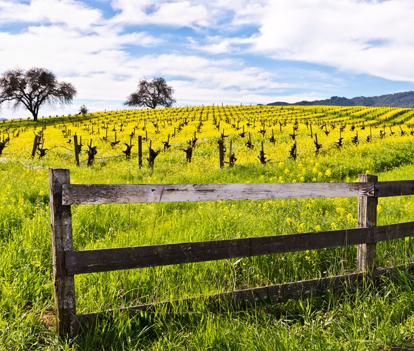 Why You Should Go to Napa Valley This Spring