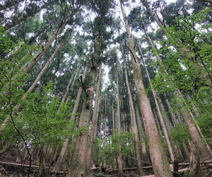 Why You Should Go Forest Bathing in Japan
