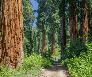 World's Largest Private Sequoia Grove Set to Become Public Land