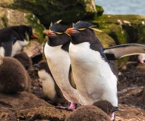 How an Encounter with Penguins Changed Her Life