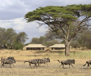 There's Never Been a Better Time to Book a Last-Minute Safari