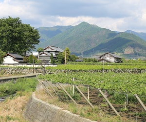 Japan's Hidden Wine Region Offers Hot Springs, Hiking, and Historic Temples
