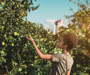 Urban Foraging: An Excellent (and Totally Legal) Way to Get a Taste of a City