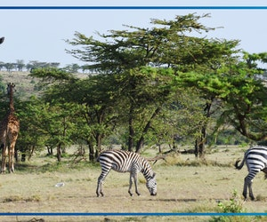 7 Things I Wish I'd Known Before Going on Safari in Kenya