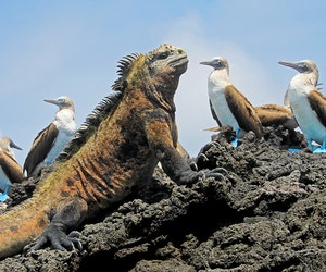 Galápagos by Land: You've Never Seen the Islands This Way