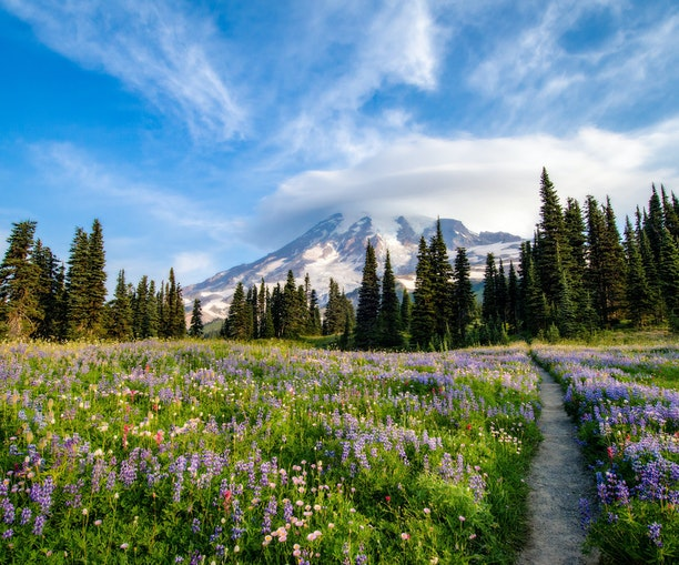 Mesmerizing Wildflowers Are About to Take Over This U.S. National Park
