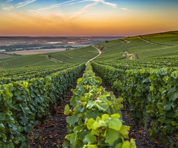 In France, theChampagne Region Gets Its First Wellness Resort