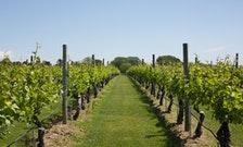 The New-Old Reason You Need to Go Wine Tasting on Long Island