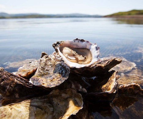 An Oyster Lover's Guide to Ireland   Ireland
