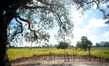 Northern California Wine Country Is Open—Travel Responsibly