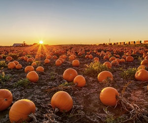 6 Pumpkin Festivals to Hit This Fall