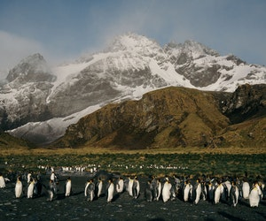 Call of the Wild: Exploring the Beauty of South Georgia Island