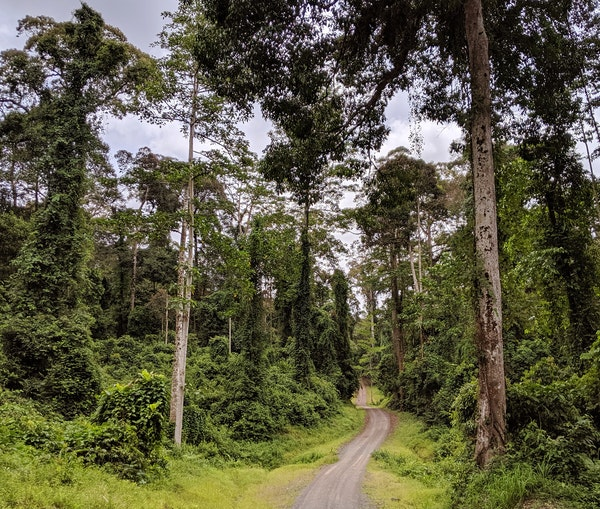 A Trip to Borneo Challenged My Fantasy of Adventure Travel