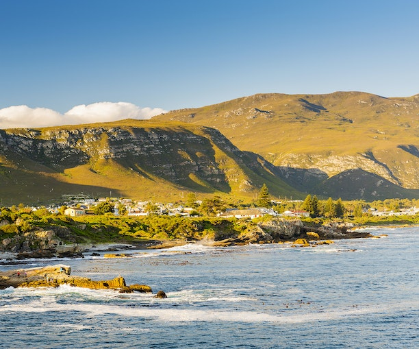 Whale-Watching, Elephants, and Surfing: The Ultimate South Africa Road Trip