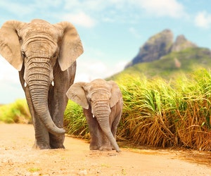 Africa's Elephants Are in Peril—but Travel Could Help Protect Them