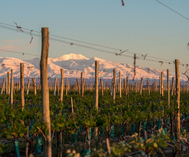 How One Entrepreneur Put Down Roots in Argentina's Wine Country