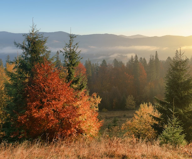 The Best National Parks for Phenomenal Fall Foliage