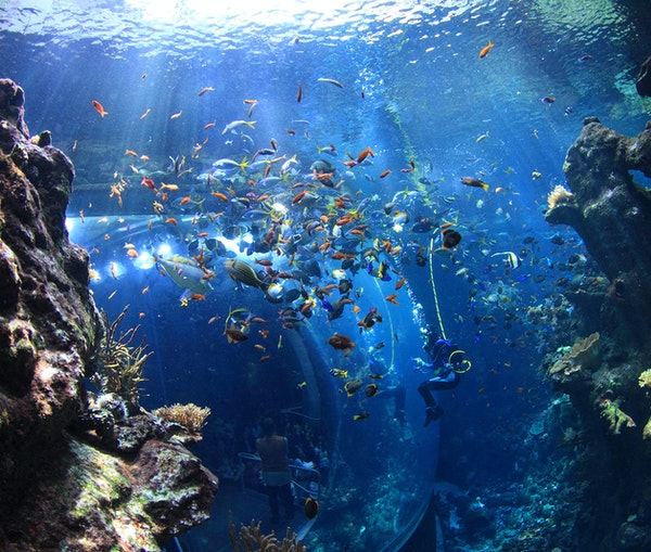 California's Best Aquariums: Sea Otters, Penguins, and Sharks, Oh My!