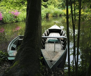 Monet's Colorful Gardens in Giverny, France, Reopen to Visitors