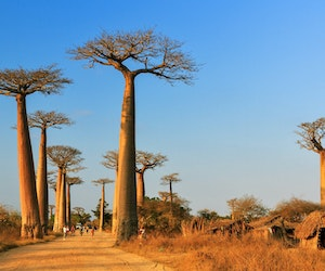 10 Amazing Ancient Forests Around the World
