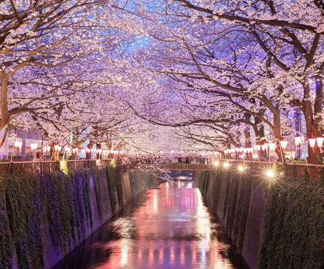 Why You Should Go to Tokyo This Spring Tokyo