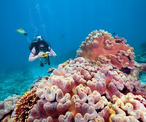 This Virtual Tour of the Great Barrier Reef With David Attenborough Is the Escape We Need