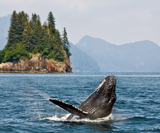 How to Experience Alaska's Real Essence on a Cruise