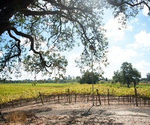 Northern California Wine Country Is Open, but Travelers Should Take Precautions