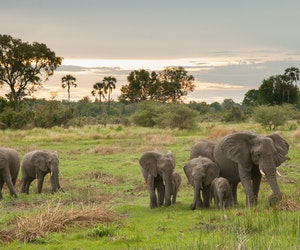 Why You Should Slow Down on Your Next Safari