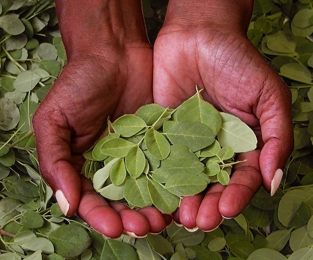 Why You Should Travel forMoringa, the Wellness Plant That's Not Just a Trend
