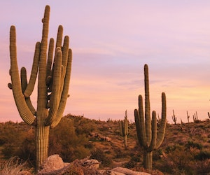 Why You Should Visit Scottsdale This Fall