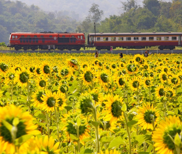 Unforgettable Luxury Train Experiences That Will Set You on the Right Track