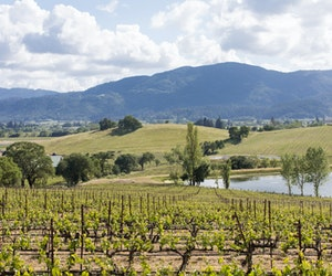 Experience Northern California Wine Country in Style